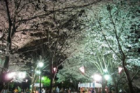 熱川温泉桜まつり