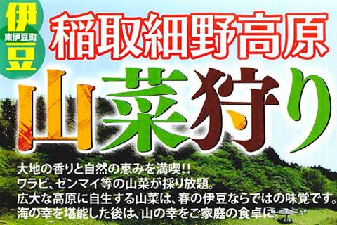 稲取細野高原山菜狩り