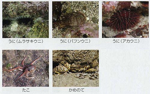 ng_fish3.jpg