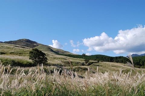稲取細野高原秋のすすきイベント