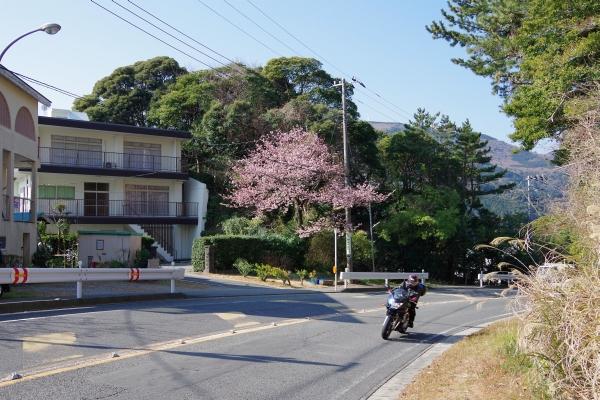 201502sakura1.JPG