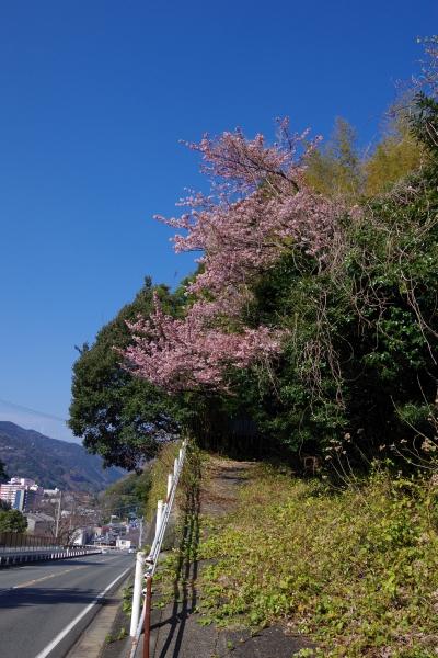 201502sakura2.JPG