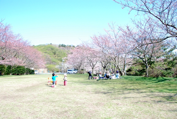 kurokan_sakura_201503_05.JPG